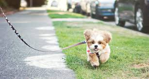 investment ideas - dog walking